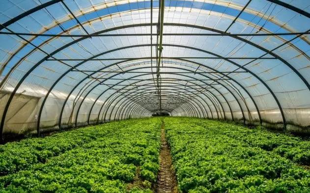夏季温室大棚种植的雾化降温